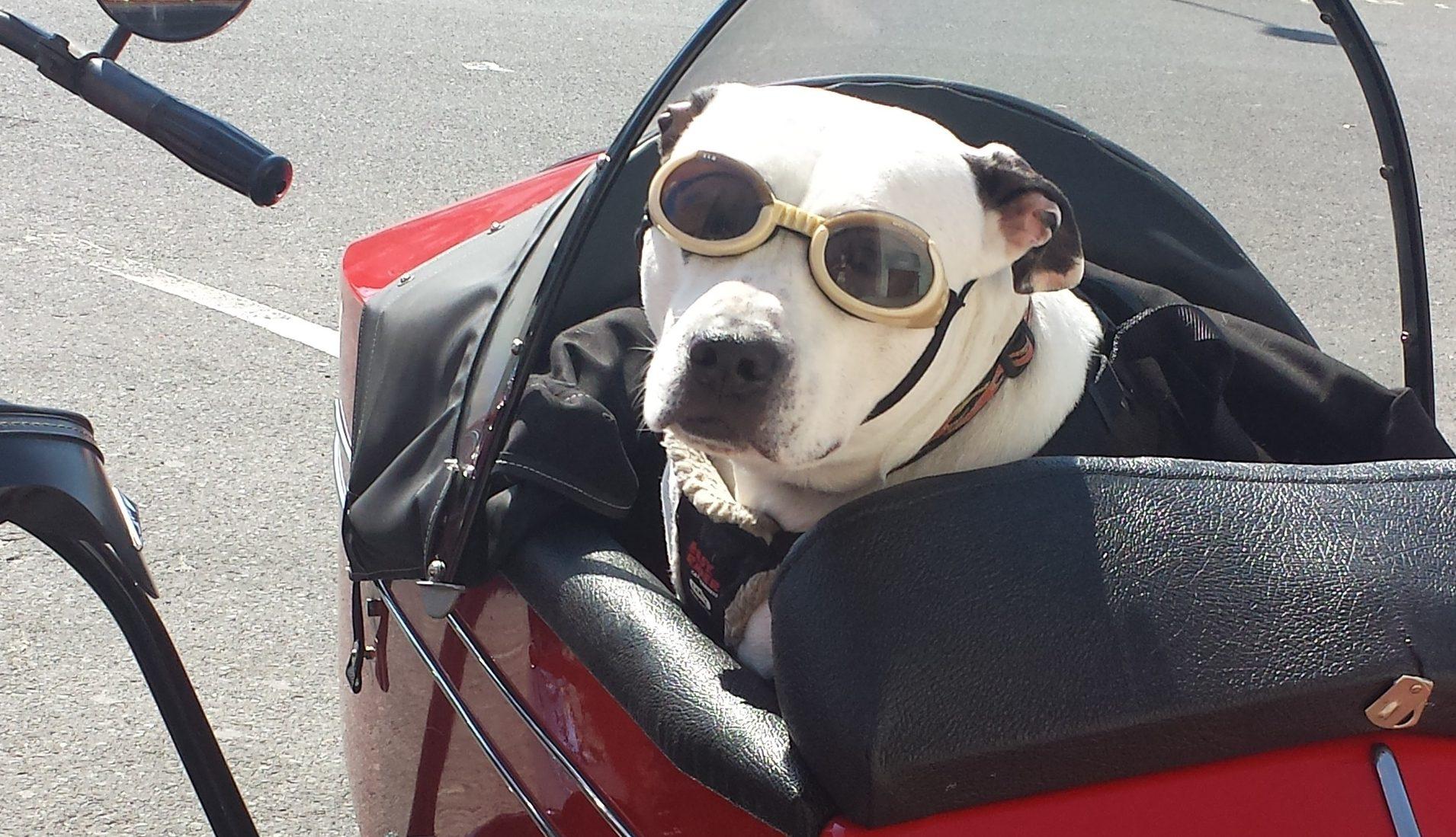 dog carrier motorcycle tank bag - 58% OFF - newriversidehotel.com